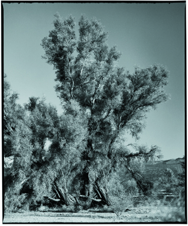Joshua Tree National Monument, CA, Black and White photo of a Joshua Tree by Steve Landis